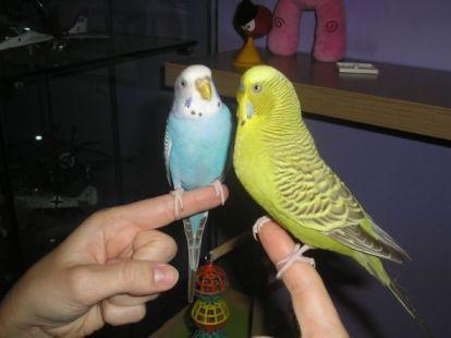 Lilo y Asha