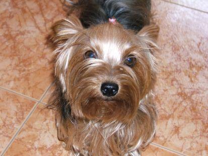 Nuestra perrina Lulu.