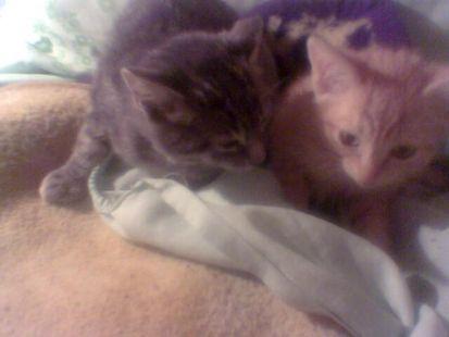 mis gaticos de pequeños.