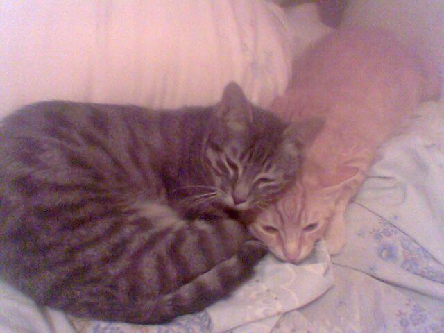 mis gatos_01