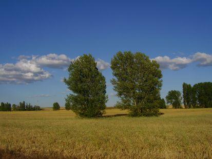 primavera en santervas de campos